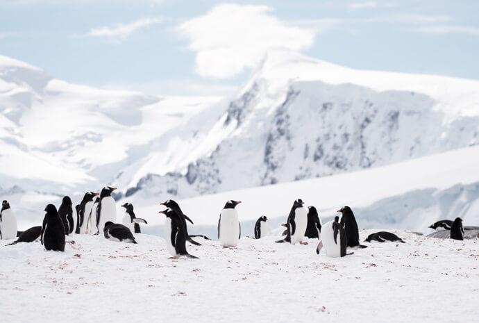 Frozen Antarctic Adventure 12 days