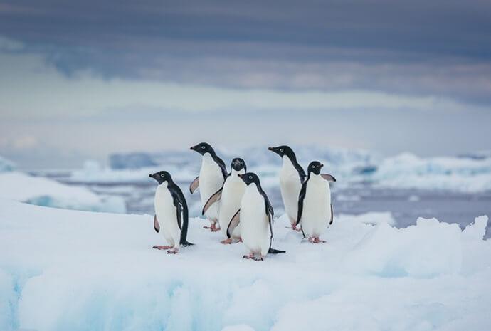 Antarctic Explorer 12 days