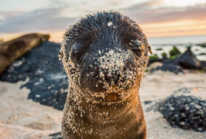 Luxury Galapagos - West & Central Islands 10 Days