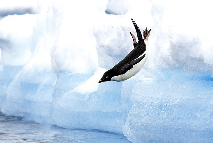 Luxury Antarctic Peninsula 12 days