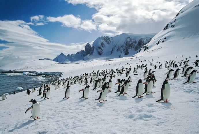 Antarctic Classic in Depth 13 days