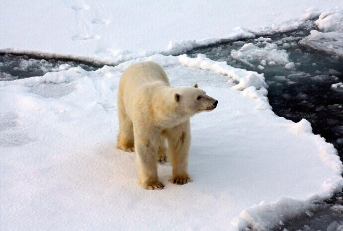 Realm of the Polar Bear in Depth 11 days