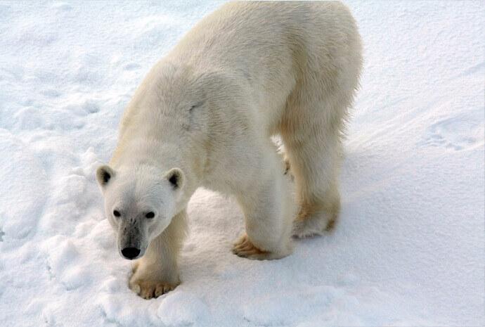Realm of the Polar Bear 8 days