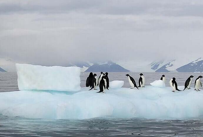 Luxury Antarctic Peninsula & Circle 14 days