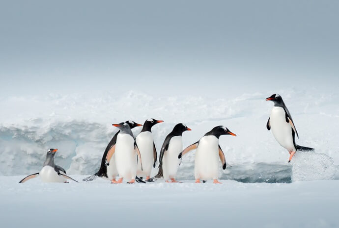 Antarctic Express Cruise/Fly 6 days