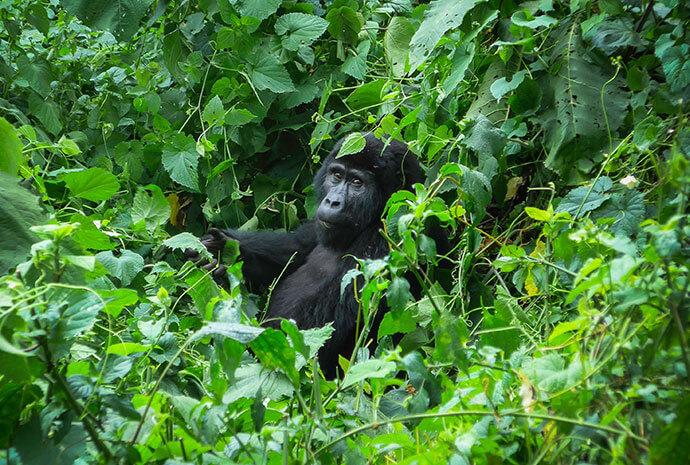 Rwanda & Uganda Wildlife & Culture 8 Days