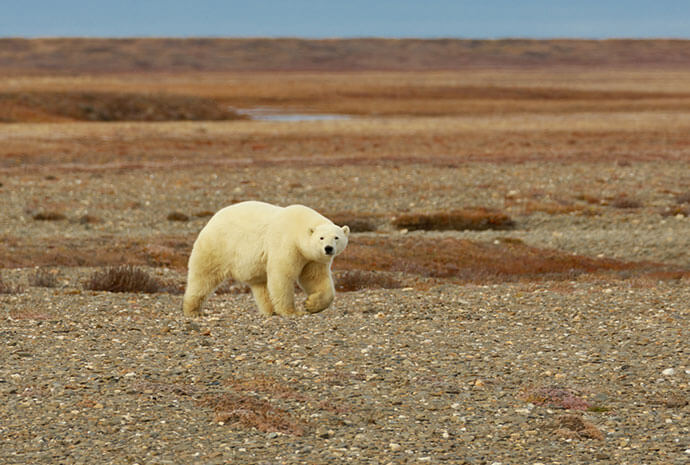 Wrangel Island Adventure 16 Days