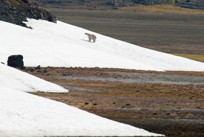 North Spitsbergen Arctic Autumn by Sailing Ship 8 days