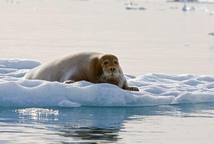 Around Spitsbergen 10 days
