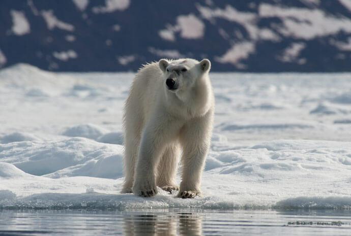 North Spitsbergen Polar Bears - 8 Days