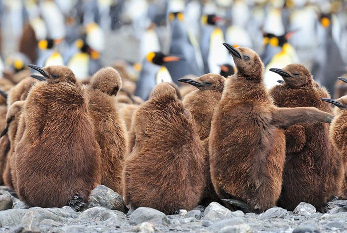 Extended Falklands, South Georgia and Antarctica 22 days