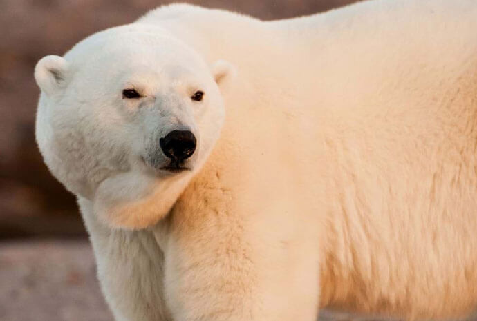 Svalbard, Unique & in Depth. A Photographic Exploration led by Chris Weston 12 Days