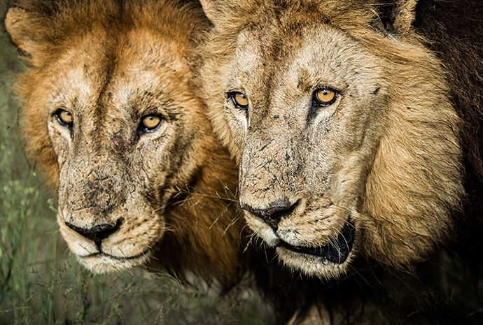 Chobe, Okavango Delta & Kalahari Guided Photo Safari - Small Group, Max 8 Pax – 10 Days