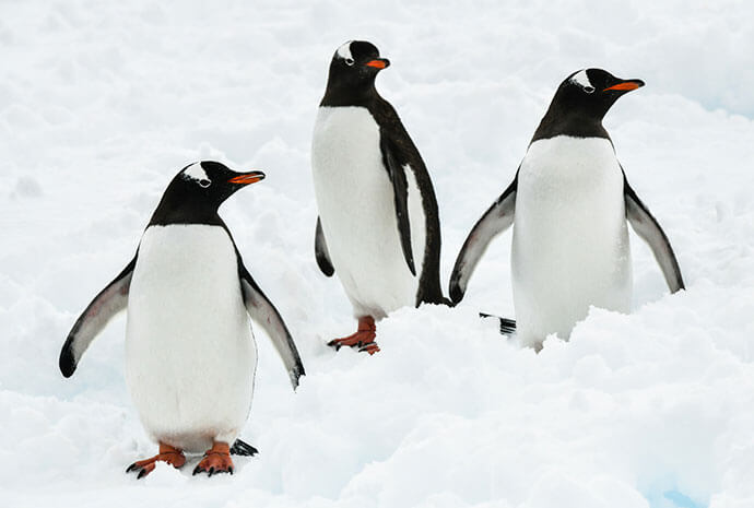 The White Continent in Luxury 12 days