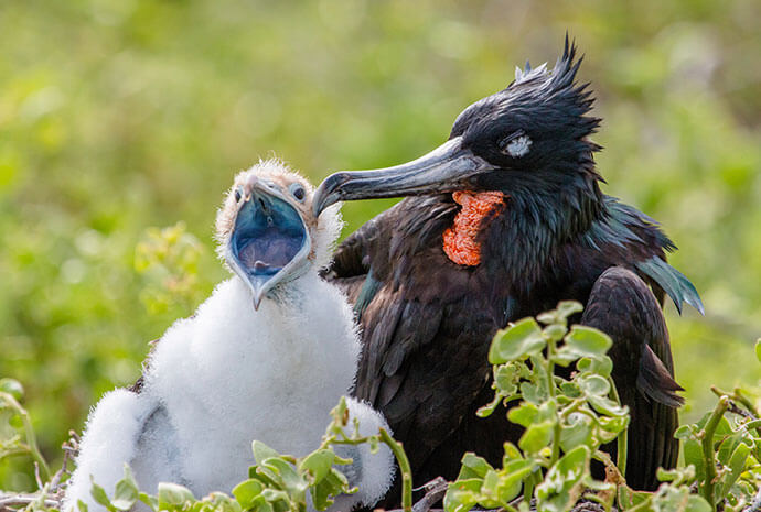 Ecuador & Galapagos Photographic Adventure with John Beatty – Small Group