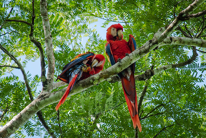 Luxury Costa Rica & Panama Cruise with National Geographic 11 Days