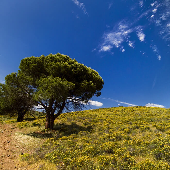 Algarve Hills